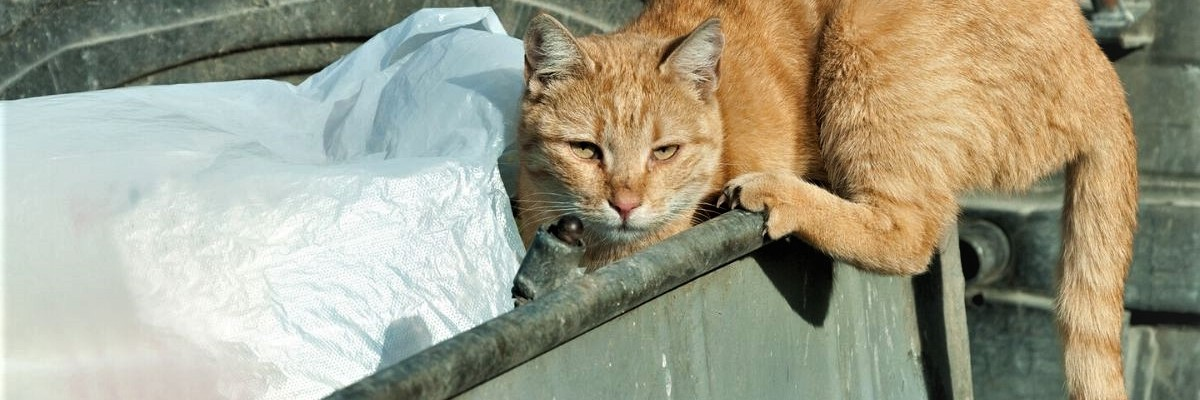 Cody digging in The Bin for Content
